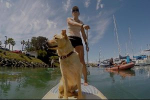 SUP Pups San Diego paddleboard lessons, paddle boarding san diego, sup rental, san diego paddle boarding, san diego paddle board, stand up paddle board san diego, paddle board san diego, stand up paddle boarding san diego, san diego kayak rentals, kayak rentals san diego, paddleboard lessons, paddle board rental san diego, san diego paddle board rentals, sup yoga, sup san diego, Sup pups, Sup pups san diego, San diego sup yoga, Sup lesson san diego, Where to paddleboard with your dog , san diego paddleboard lessons, Sup rental san diego, La jolla cove paddleboarding, stand up paddle board lessons san diego, point loma paddleboard rentals, liberty station sup rentals