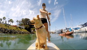 SUP Pups San Diego