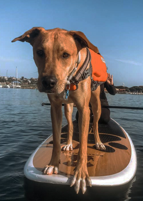 kayak rental san diego, san diego kayak rental, kayak shop near me, water bike rentals, paddle boarding lessons san diego, san diego kayaks, rental kayaks, san diego paddleboard lessons, rent aqua cycles, rent a stand up paddle board, kayaking san diego, sea kayaking lessons, san diego kayak, kayaking in san diego, kayak in san diego, kayak san diego, san diego kayaking, aqua racks, paddleboard rentals san diego, san diego paddleboard rentals, rent paddleboard san diego, stand up paddle board lessons san diego, paddle board lessons san diego, rolling lessons, aquaadventures, paddleboard rental, used kayaks san diego, paddle boarding san diego, aqua adventure, where to paddleboard in san diego, prone paddleboard california, adventures in bridge san diego, san diego sup rentals, kayak rental malibu, boat rentals san diego bay, www.aqua, whale in san diego bay, mission bay boat rentals, mission beach boat rentals, boat rentals in san diego